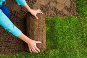 Ny græsplæne pris